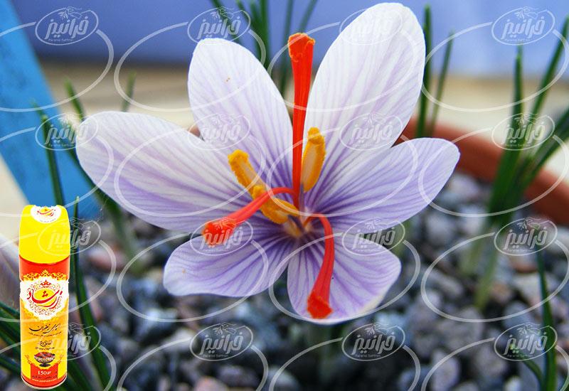بازار صادرات میلیون دلاری اسپری مخصوص زعفران