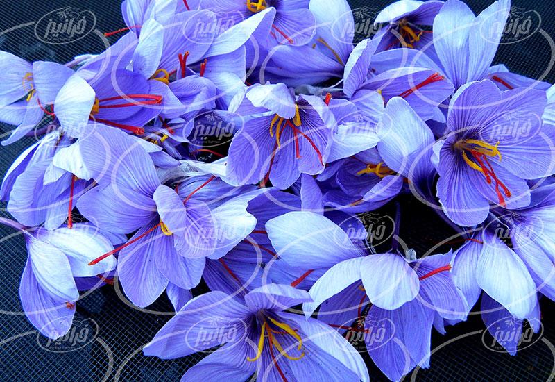 پخش زعفران قائنات با بسته بندی صادراتی