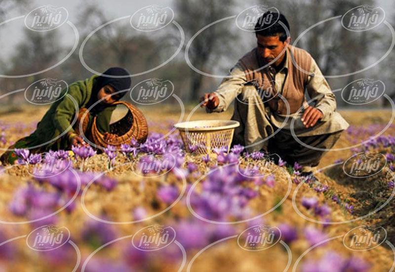قیمت 1 کیلو زعفران با بسته بندی ویژه