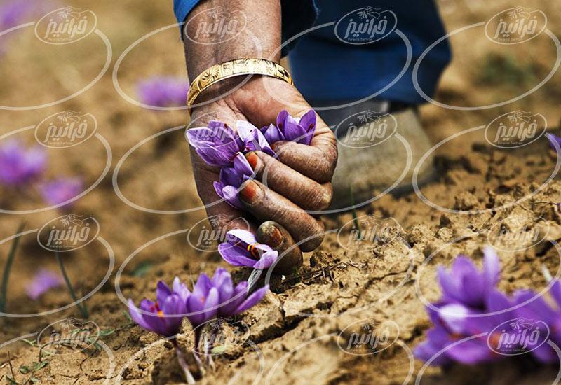 میزان سود حاصل از فروش زعفران در دبی