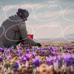 عرضه عصاره زعفران مایع در کشور چین