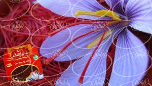 قیمت پودر زعفران قائنات در فروشگاه معتبر اینترنتی