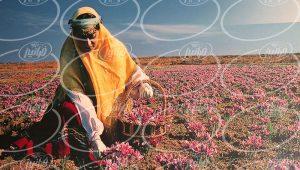 درآمد ماهانه عرضه پودر زعفران در کرج