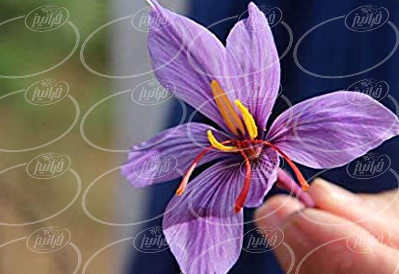 خرید زعفران فله ای با نازلترین قیمت ها